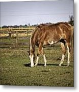 Chestnut In The Pasture Metal Print