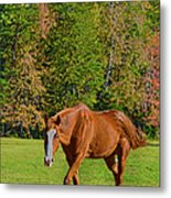 Chestnut Red Horse Metal Print
