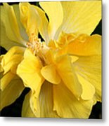 Chicago Botanical Gardens - 71 Metal Print by Ely Arsha