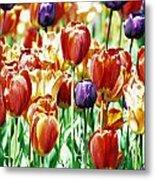 Chicago Tulips Metal Print