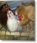 Chick Trio  Metal Print