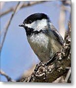 Chickadee At Carson Nature Center Metal Print