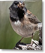 Chickadee Bringing Lunch To The Kids Metal Print