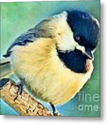 Chickadee Greeting Card Size - Digital Paint Metal Print