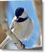 Chickadee On A Bright Day  Metal Print