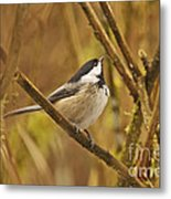 Chickadee On Alert Metal Print