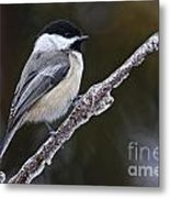 Chickadee Pictures 228 Metal Print