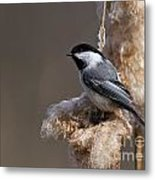 Chickadee Pictures 261 Metal Print
