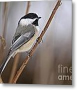 Chickadee Pictures 316 Metal Print