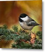 Chickadee Pictures 375 Metal Print