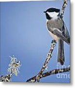 Chickadee Pictures 409 Metal Print