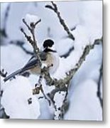 Chickadee Pictures 507 Metal Print