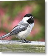 Chickadee Song Metal Print