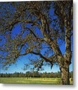 Chickamauga Battlefield Metal Print by Mountain Dreams