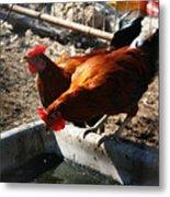 Chicken A La Carte Metal Print