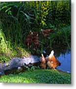Chicken By The Pond Metal Print