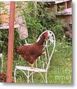 Chicken In The Chair Metal Print