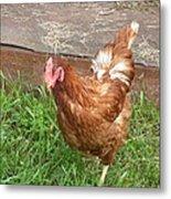 Chicken Portrait Metal Print