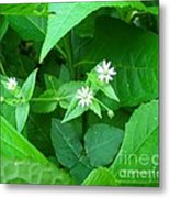 Chickweed Trio Metal Print