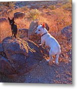 Chico And Paco The Mountain Dogs Metal Print