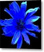 Chicory 3 Metal Print