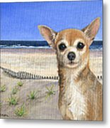 Chihuahua At Sea Isle City New Jersey Metal Print