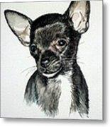 Chihuahua Black 2 Metal Print