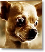 Chihuahua Dog - Electric Metal Print by Wingsdomain Art and Photography
