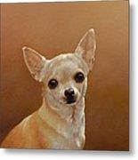 Chihuahua I Metal Print