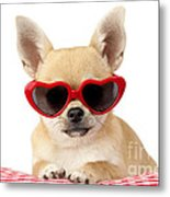 Chihuahua In Heart Sunglasses Dp813 Metal Print by Greg Cuddiford