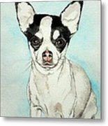 Chihuahua White With Black Spots Metal Print