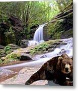 Chillin Bear Metal Print by Bob Jackson