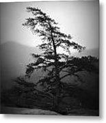 Chimney Rock Lone Tree In Black And White Metal Print
