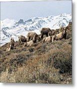Chimney Rock Rams Metal Print