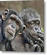 Chimp Couple Metal Print