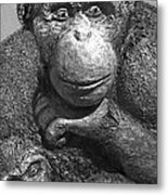 Chimpanzee Carving Metal Print