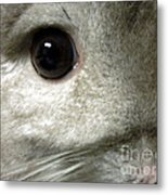 Chinchilla Face Metal Print