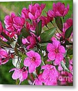 Chinese Apple Blossoms Metal Print