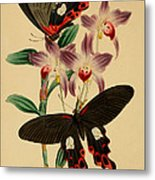 Chinese Butterflies Metal Print by Philip Ralley