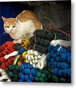 Chinese Cat Metal Print