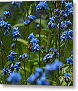 Chinese Forget Me Nots And Honey Bee Metal Print