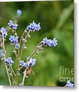 Chinese Forget Me Nots Metal Print