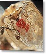 Chinese Lantern Plant - H Metal Print