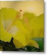 Chinese Rose Duo Metal Print