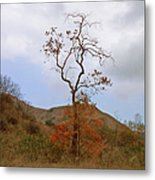 Chino Hills Tree Metal Print