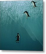 Chinstrap Penguins Leaping Metal Print