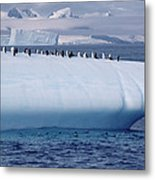 Chinstrap Penguins On Iceberg Metal Print