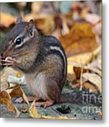Chipmunk Hungry Metal Print