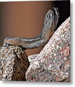 Chipmunk Yoga Metal Print