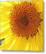 Chipmunk's Peredovik Sunflower Metal Print